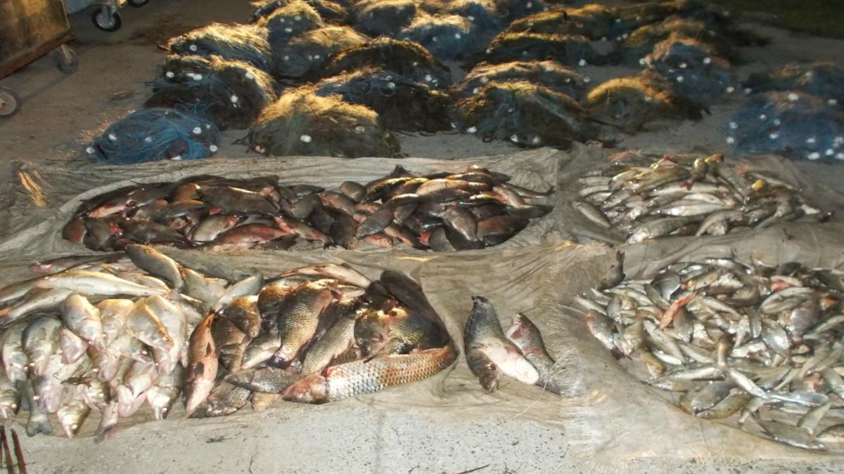 Peste pescuit ilegal
