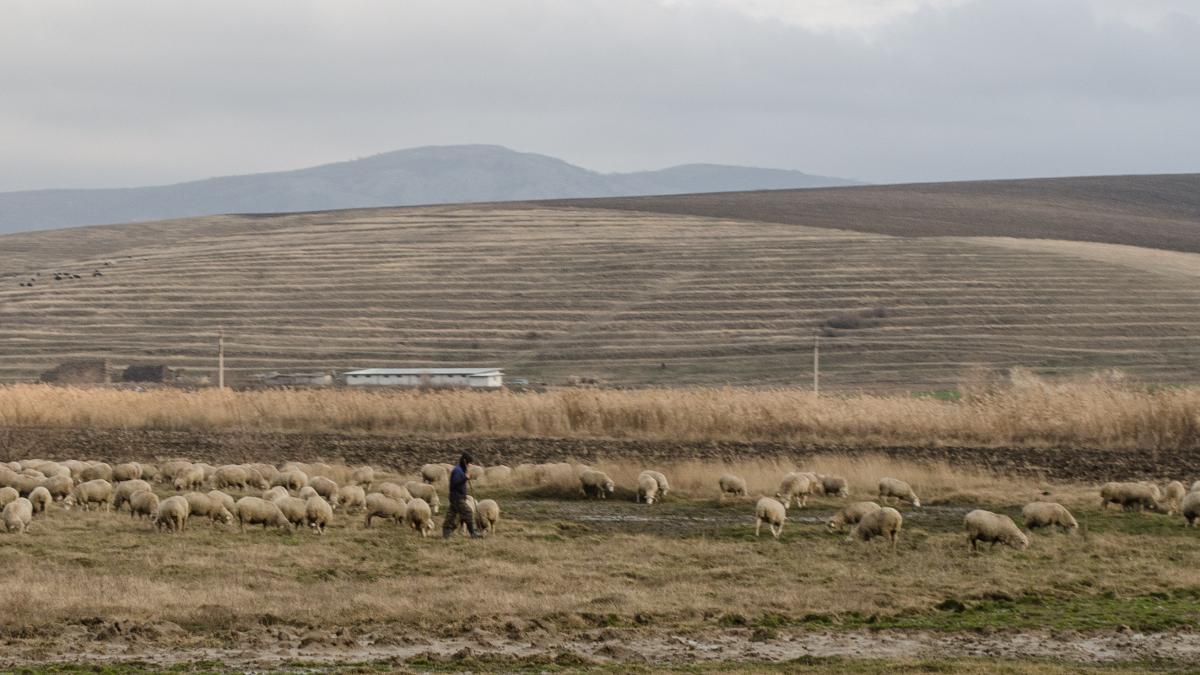 Cioban cu oi (1)