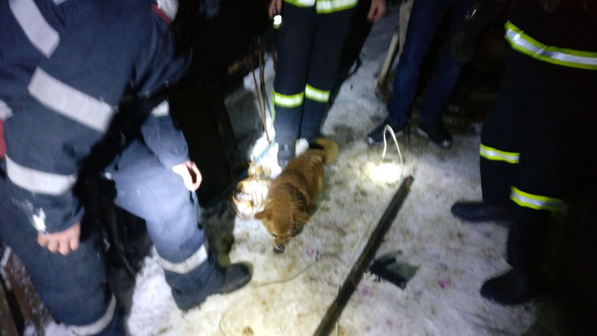 Interventie pompieri caine hazna (1)