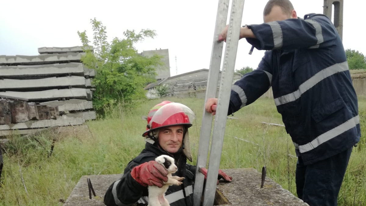 pompieri salvare caini