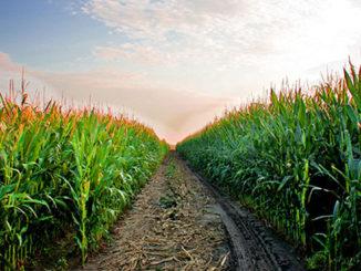 Produsele Norofert Organics pentru o agricultură ecologică. FOTO Norofert.ro