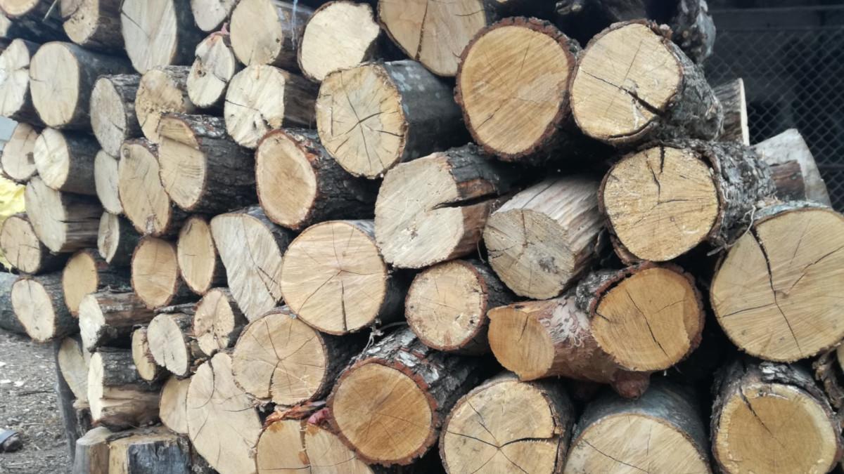 lemn taiat arbori lemnos (2)
