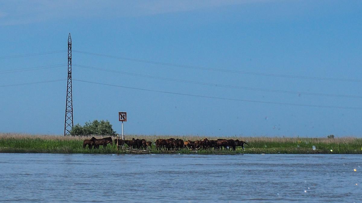 cai salbatici in delta dunarii