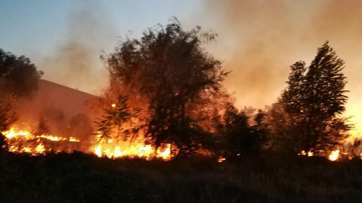 incendiu vegetatetie