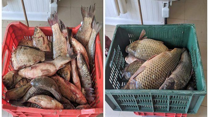 100 de kilograme de pește, fără documente legale, confiscate în apropierea lacului Razelm FOTO Garda de Coastă