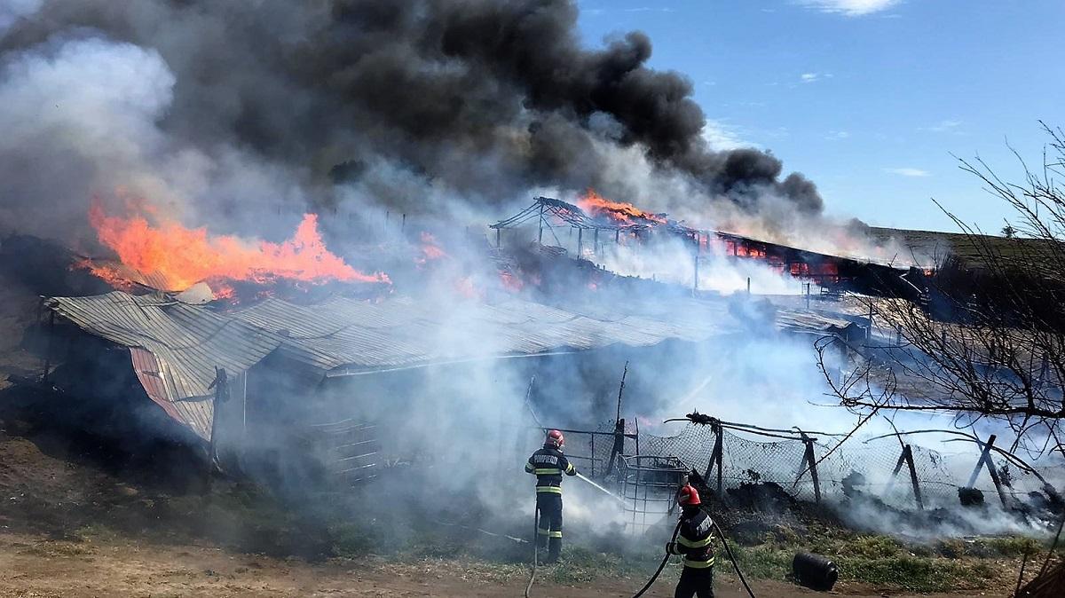 Adăpost de animale cuprins de flăcări în zona localității tulcene Somova. FOTO ISU Tulcea