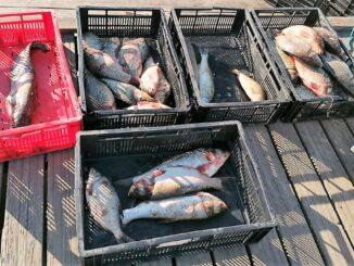 Zeci de kg de peşte și icre, confiscate de polițiștii de frontieră tulceni. FOTO Garda de Coastă
